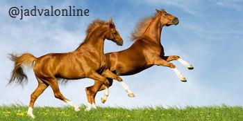معمای معامله اسب ها