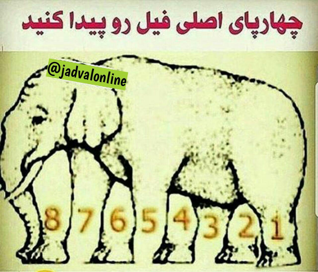 معمای فیل