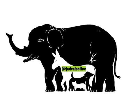 معمای تعداد حیوانات