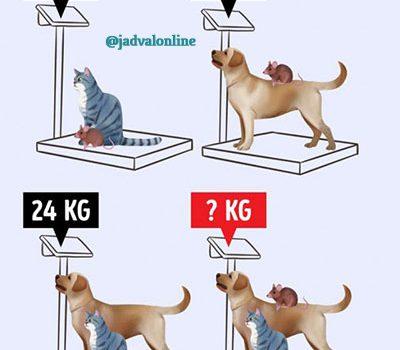 معمای ریاضی مجموع وزن